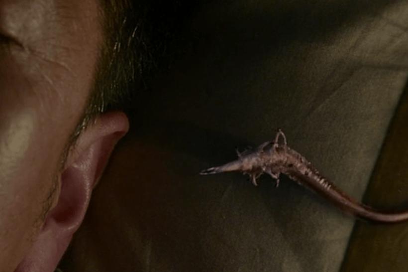 parasyte ear