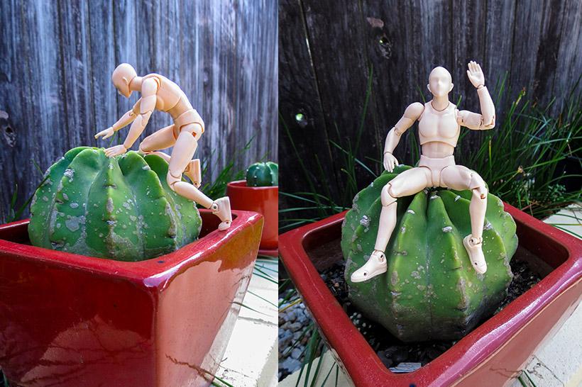 BodyKun-cactus-climb-sit